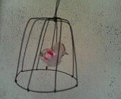 ワイヤーの鳥かご